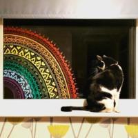 Hannah Weeks Ceefa Cat and Rainbow.jpg